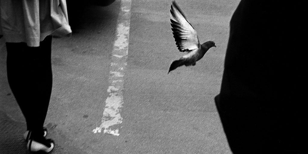 cropped-pigeon.jpg